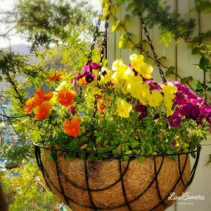 植えっぱなしでも元気な花とたまたま咲いてくれた背の低いチューリップ