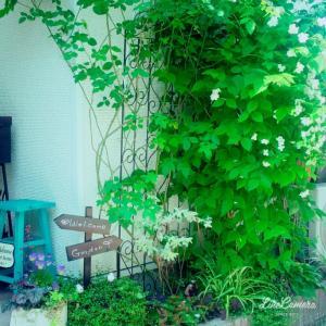 極細ボーダー花壇の今