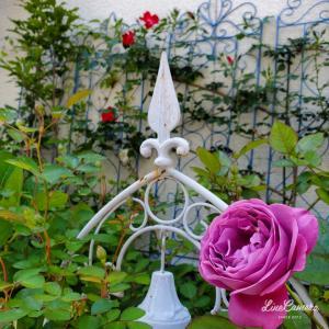 2021、バラの香りが漂いはじめた小さな庭