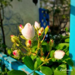 秘密の花園の群星やアンジェラ