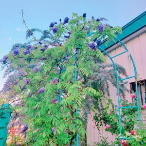 個性的な樹木、アメジストフォールやコバノズイナヘンリーズガーネットなど