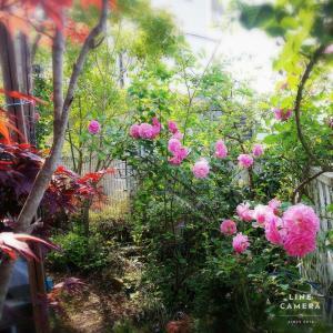 すかすか丸見え庭でも秘密の花園になりました!