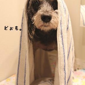 お風呂上りに遊ばれる