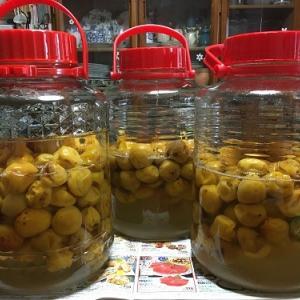 梅シロップと梅漬け~一粒で2度おいしい漬け方~