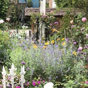 9月中旬の庭の様子