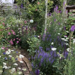 【メインガーデン】アスチルベ、千鳥草、デルフィニューム等が咲いています