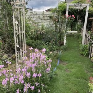 9月初めの庭(トラノオが咲いています)