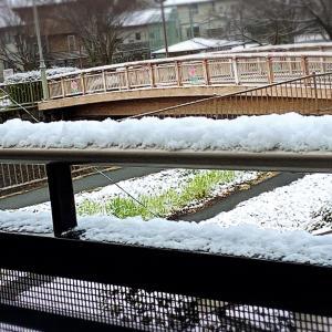 真っ白な雪で、波動UP!!