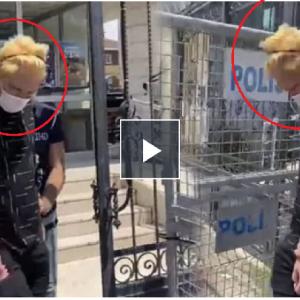 イスタンブールで猫5匹を食べた邦人男性、強制送還へ
