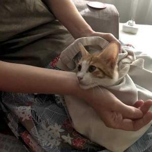 公園の子猫しゃんを病院へ連れて行く