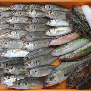 3日分の魚を確保