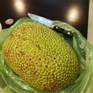 カンボジア生活 お土産シリーズ ジャックフルーツ