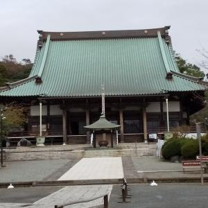 遊行寺の大イチョウが台風で折れました!( ;∀;)