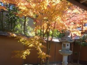 鎌倉で京風で雅な紅葉狩りを・・・!
