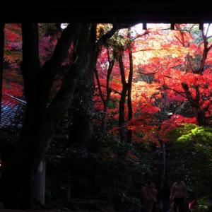 【午前縛りライド】紅葉の名所、有馬の「瑞宝寺公園」を目指す紅葉ライドへ!