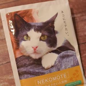 【猫にモテたい入浴剤】8にゃんの反応は?