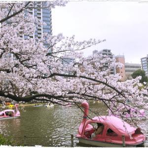 上野恩賜公園♪ 桜♪ 谷中♪