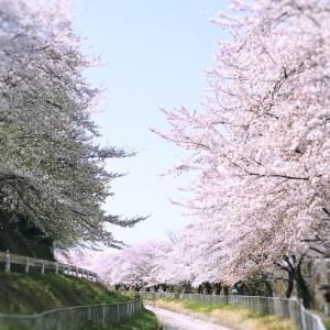 桜♪ 埼玉♪ 作品♪ 多肉♪