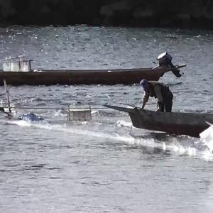 岐阜長良川/瀬張り網漁・落ちアユ狙い