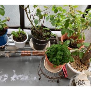 植物いじり