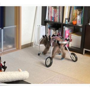 車椅子トレーニング