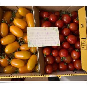 美味しい「トマト」♪