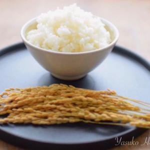 【お仕事キロク】コラム「お米でもたんぱく質が摂れる⁈」