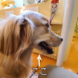 焦った~(^_^;)