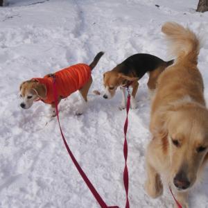 犬生の選択