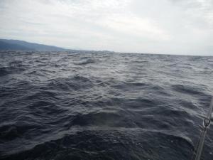 深海のルビーか幻の魚か