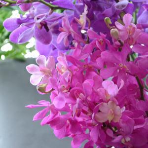 レッスンでお花の名前も学びましょう♪