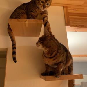 先住猫って偉いの?