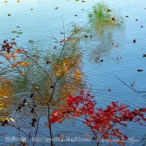晩秋の南伊奈ヶ湖