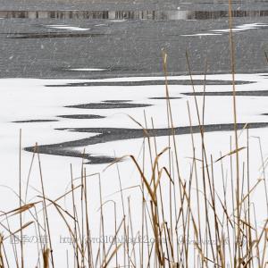 冬の女神湖