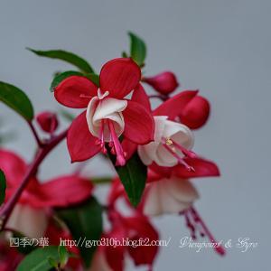 散歩道に咲く春の花を!!