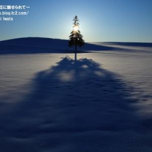 【美瑛 冬】三者一直線