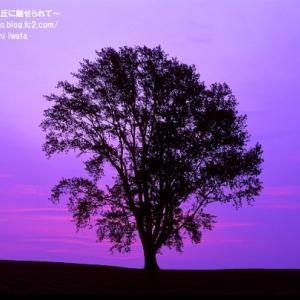 【美瑛 春】夜明けを楽しむ