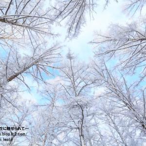 【美瑛 冬】新しい一日