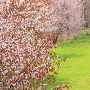 【美瑛 春】丘の遅い春