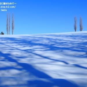 【美瑛 冬】樹影の妙