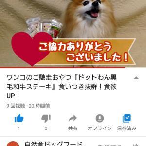"""""""【本気レビュー】ドットわん 黒毛和牛ステーキ"""""""
