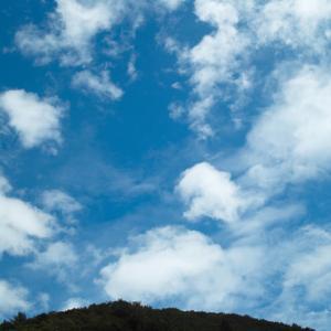 台風一過の青ゾラと朝顔
