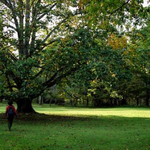 高島市の交流人口、関係人口、定住人口・・・くつきの森で、森の整備作業を!