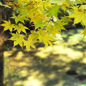 鯖街道・・・遠足日和、歩いて「久多・秋の里山まつり」へ