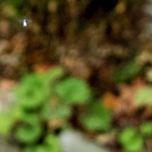 ナラモミジ・・・クマとコハクチョウ