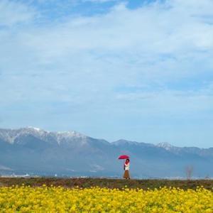 定番スポット、比良山系と菜の花