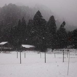 雪でした・・・針畑