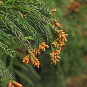 針畑の春告げ、花や山菜・・・そして、スギ花粉