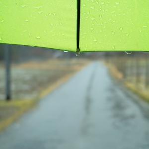 グリーンゾーン・・・春の嵐と傍聴