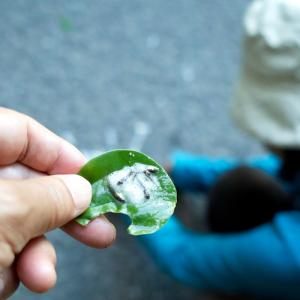 早歩き散歩とモリアオガエルの卵・・・琵琶湖中央病院通い